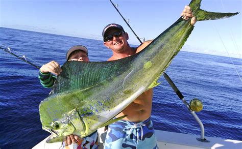 maui fishing report maui fishing charters faq start me up sportfishing