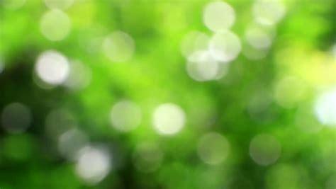 nature blurred green background beautiful sun shine