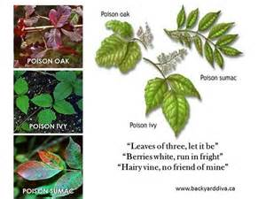 Identify Poison Ivy Oak and Sumac