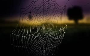 Wet spider web wallpaper #11774