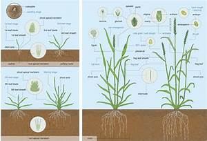 The Transcriptional Landscape Of Polyploid Wheat