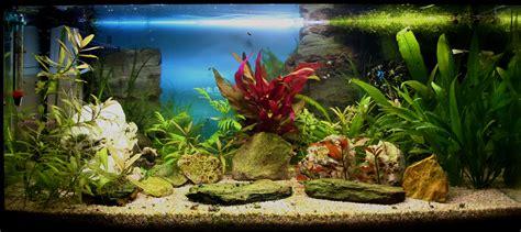 substrat aquarium bien le choisir pour r 233 ussir le sol de votre aquarium