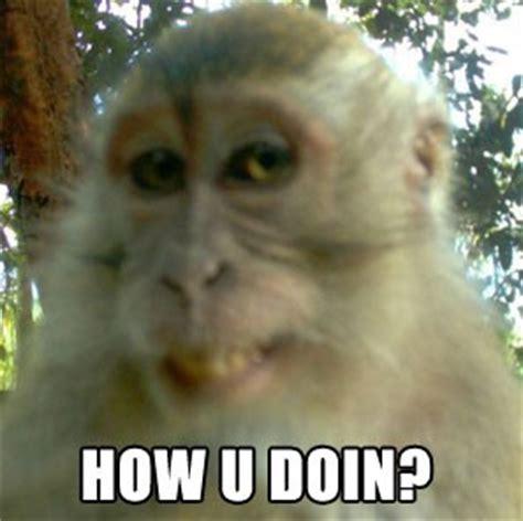 Meme Monkey - well hello monkey s meme worthy smile for spy camera houston press