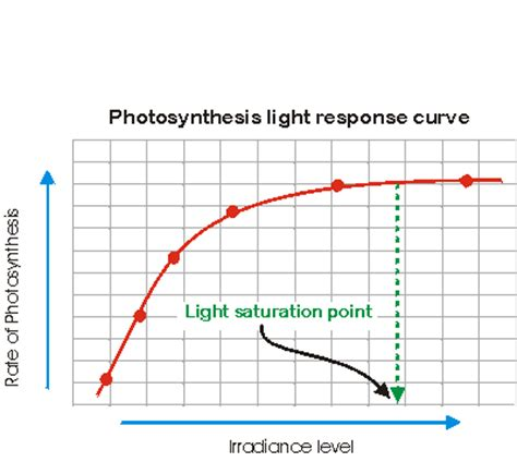 Why Does Darkness Affect The Light Independent Reactions Of Photosynthesis by Why Is There A Light Saturation Point