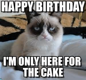 birthday cat meme 25 best ideas about grumpy cat birthday on