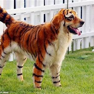 Tiger-and-Dog-Hybrid | Man's Truly Best Friend | Pinterest