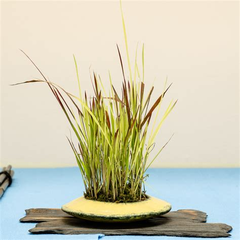 Botanischer Garten München Bonsai by Bonsaiausstellung In M 252 Nchen Nymphenburg 2