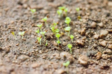 how do succulents grow how to grow succulents from seed the greedy vegan