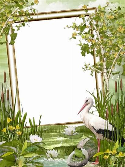 Nature Frame Cadre Frames Photoshop Tube Cigogne
