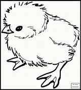 Coloring Emu sketch template