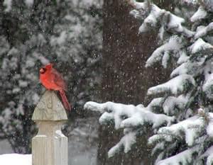 Free Winter Desktop Wallpaper with Birds