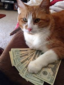 show me images of cats quot show me the money quot