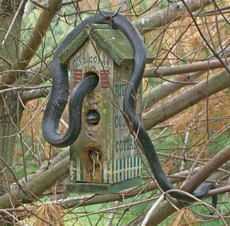 3 easy birdhouse weekend projects