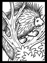 Porcupine Coloring Pages Tree Animals Printable Porcupines Animal Colouring Clipart Atozkidsstuff Coloringpagebook Advertisement Crested American Categories sketch template