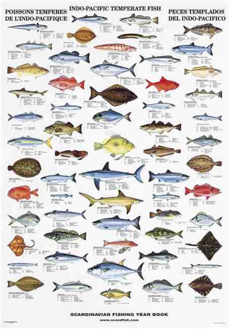 fish temperate indo pacific homepage latenemaps