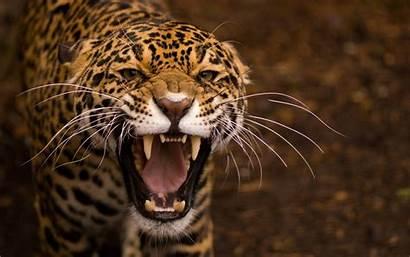 Wallpapers Retina 1800 2880 Background Jaguar Cool