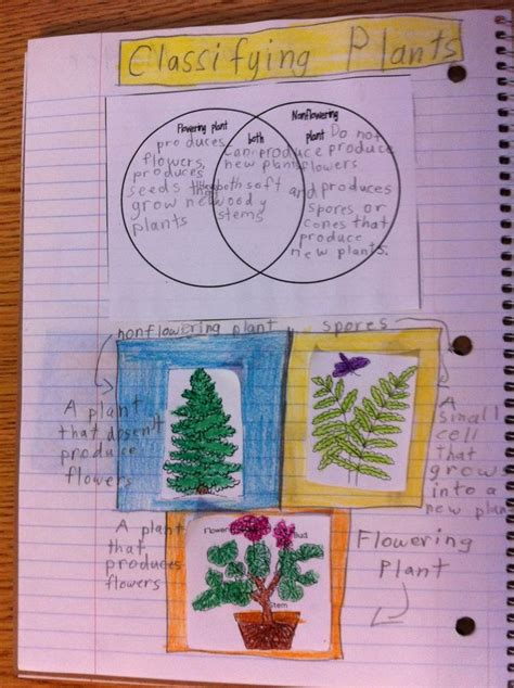 classifying plants interactive science journal