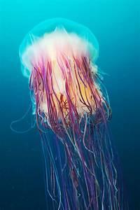 Underwater Experiments: Astounding Photographs of ...