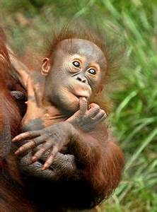 1000+ images about Super süße Affen on Pinterest ...