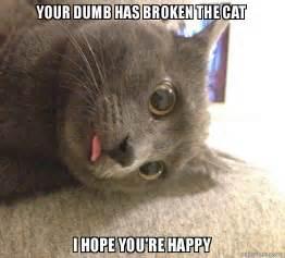 dumb cat your dumb has broken the cat i you re happy make a meme