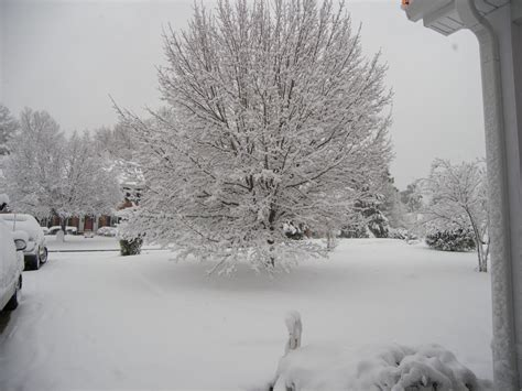 where are all the christmas blizzard 2010 snow pics