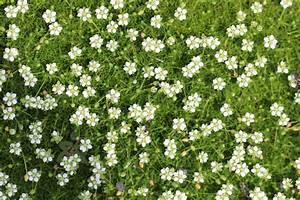 Bodendecker Blaue Blüten : bodendecker f r die sonne 60 sorten f r sonnige pl tzchen ~ Frokenaadalensverden.com Haus und Dekorationen