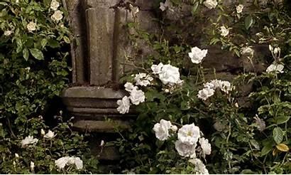 Garden Secret Gifs Flowers Flower Scenery 1993