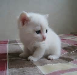 white cat names wedding world tabby kitten names