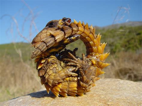 """This Lizard Would Totally Win A """"look Like A Dragon"""