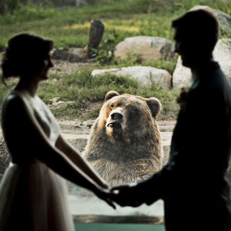 The Internet Is Cracking Up Over This Bear's Reaction To ...