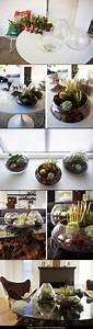 Pflanzen Für Terrarium : diy terrarium dekoideen pinterest garten gartenarbeit und pflanzen ~ Orissabook.com Haus und Dekorationen