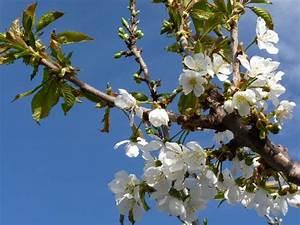 Quand Planter Un Pommier : arbres fruitiers jardiland la ravoire jardinerie la ~ Dallasstarsshop.com Idées de Décoration