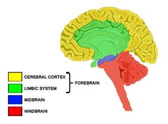 nervous system biologyisc