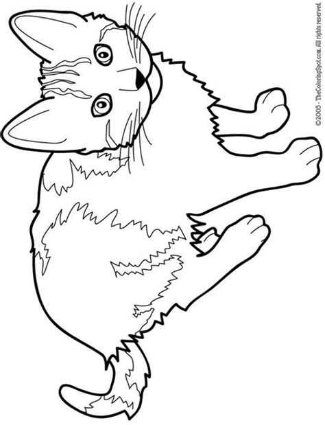 cat color pages printable cat  printable coloring