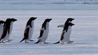 Penguin Penguins Southern