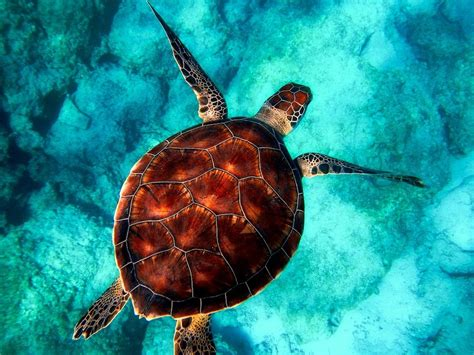 Images Of Turtles The Top 4 Countries To Volunteer With Sea Turtles Go