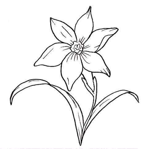 fiori disegni disegni fiori maestra