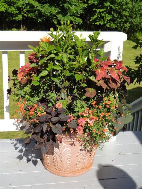 container garden ideas sun 12 best images about sun loving plants on pinterest