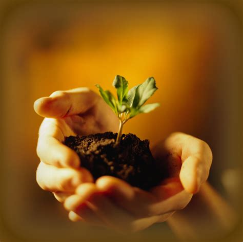 preparing soil  planting fertilizer soil amendments