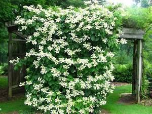 Plante Grimpante Pergola : les 19 meilleures plantes grimpantes pour pergolas ou tonnelles jardin et maison pinterest ~ Nature-et-papiers.com Idées de Décoration