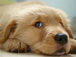 The Cutest Puppies in the World (18 photos)  Cutest