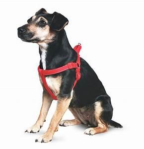 Ancol  Ud83d Udc36 Dog Black Padded Harness