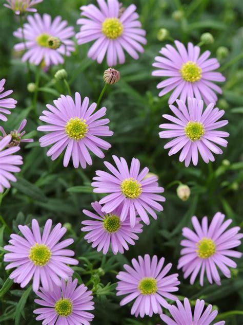plants that bloom in fall diy