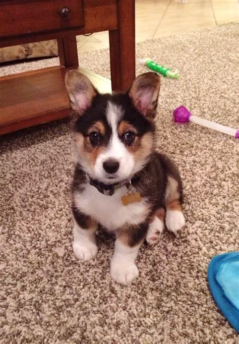 Augi - My Dog Breeders - Part 21