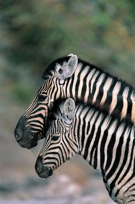 banco de imagenes animales salvajes  fotografias en