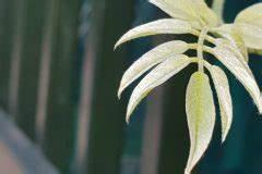 Schmucklilie überwintern Gelbe Blätter : gelbe bl tter am apfelbaum woher kommen sie ~ Eleganceandgraceweddings.com Haus und Dekorationen
