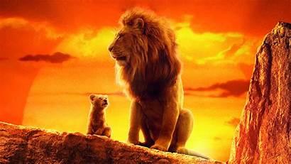 Lion Simba King 4k Mufasa Wallpapers