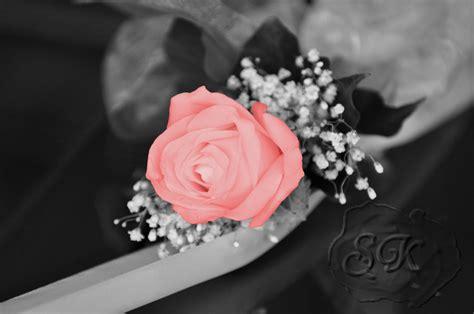 Sind Schwarz Und Weiß Farben by Schwarz Wei 223 Und Doch Farbe Foto Bild Pflanzen