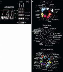A Global Genetic Interaction Network Maps A Wiring Diagram