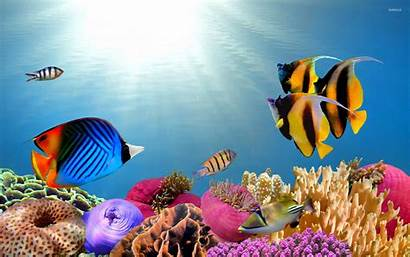 Fish Tropical Desktop Wallpapers Backgrounds Fishes Fishing